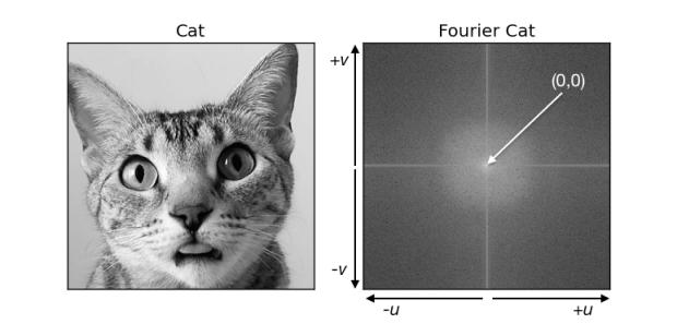 cat_spectrum2